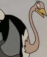 Ostrich in volume13 rileysadventures