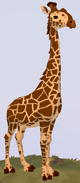 Reticulated Giraffe WOZ