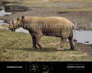 Uintatherium-Leidy-738x591