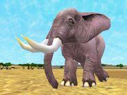 Zt2-africanelephant
