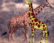 Griff and Real Reticulated Giraffe