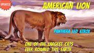 Lion, American