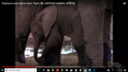 Millions of Elephants