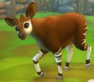 Okapi-zoo-2-animal-park