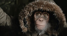 WPOTA Bad Ape with hoodie
