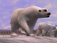 Zt2-polarbear
