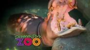 Dickerson Park Zoo Hippo