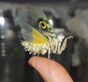 Flower Mantis