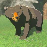 Honeyvore-bear