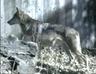 LPZ Wolf