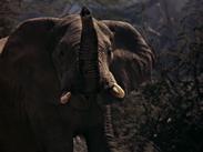 TAL Elephant