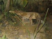Eocene land crocodile by sinusonasus1-dbk34d