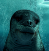 Leopard Seal water close up