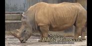 Louisville Zoo Rhino