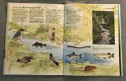 Macmillan Animal Encyclopedia for Children (34)
