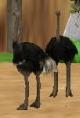 Ostrich-zoo-empire
