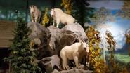 Rolling Hills Zoo Mountain Goats