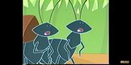 Stanley Ants