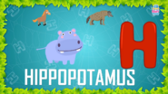 Baby Time Hippopotamus