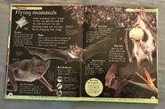 DK First Animal Encyclopedia (13)