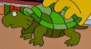 Simpsons Turtle