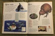 The Kingfisher First Animal Encyclopedia (38)
