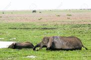 Zoboomafoo the west african swamp elephants