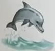 Dolphin usborne my first thousand words