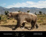 Tremarctos floridanus1-738x591