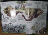 Zoo Books Elephants and Mammoths