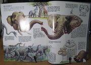 Zoo Books Elephants and Mammoths
