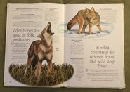 Endangered Animals (Over 100 Questions and Answers to Things You Want to Know) (3)