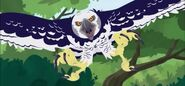 HarpyEagle (Wild Kratts)