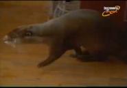 Scout's Safari Otter