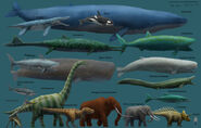 Blue Whale Sperm Whale Paraceratherium Woolly Mammoth African Elephant White Rhinoceros Hippopotamus