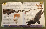 Extreme Animals Dictionary (20)