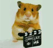 Hammy-hamster