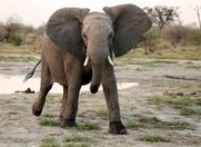 High Speed Elephants