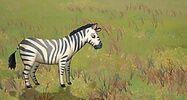 LeapFrog Zebra