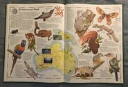The Animal Atlas (24)