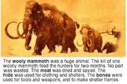 The Woolly Mammoths Were Huge Mammals