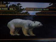The polar bear by darcygagnon-d8dq49z