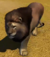 Asiatic-lion-zootycoon3