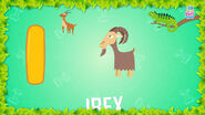 Baby Time Ibex