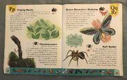 Bug Dictionary (17)