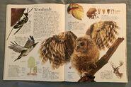 DK Encyclopedia Of Animals (22)