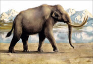 Inside steppe mammoth