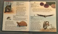 My First Book of Animals from A to Z (28)