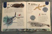 Ocean Life Dictionary (9)