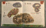 Snake Dictionary (18)